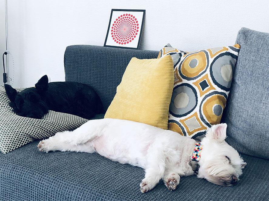 Babák és kutyák egy családban